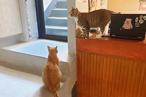 (左)雄ネコのレモンとライム