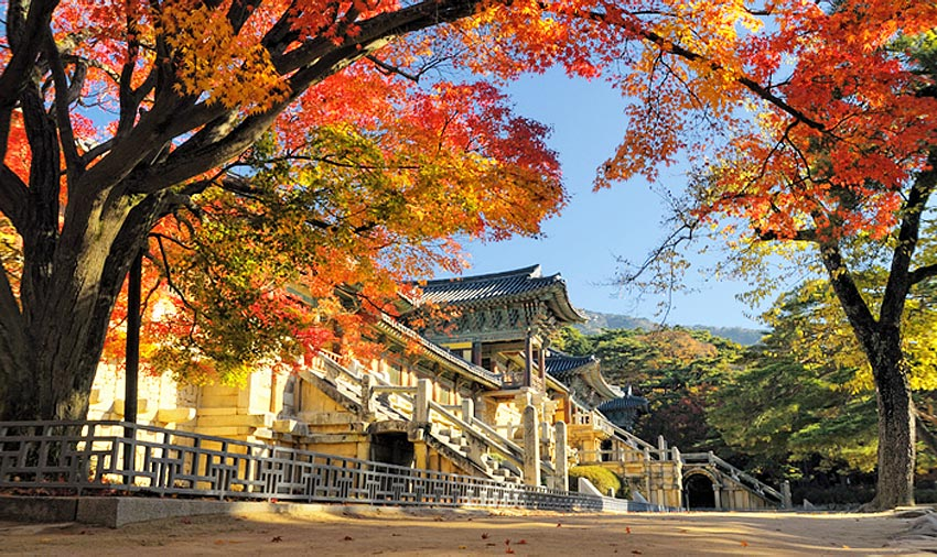 Роскошный вид Храма Пульгукса во время осеннего листопада (Источник: Мэрия г. Кёнчжу)