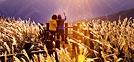 Lugares recomendados para el otoño: Viaje para ver eoksae