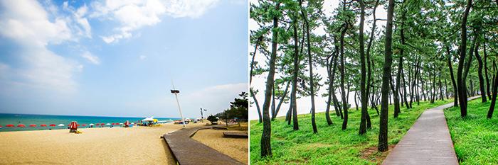 На фото) Пляж Кёнпхо (слева) / Хвойный лес на пляже Кёнпхо (справа)
