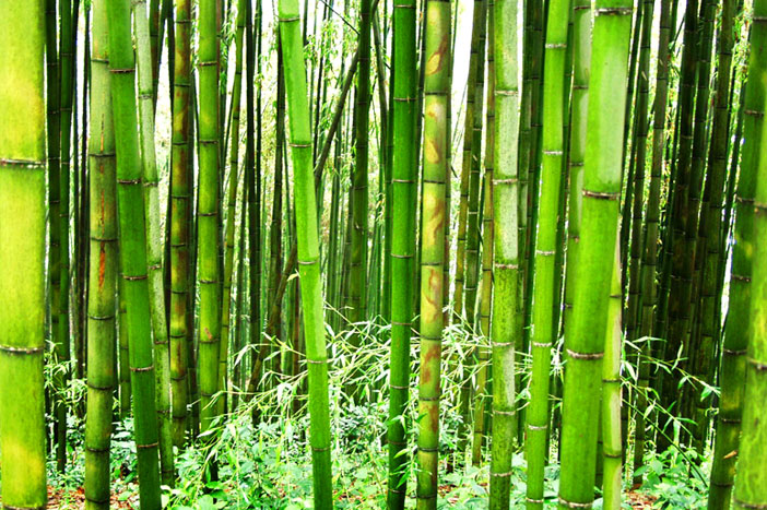 Bamboo forest of Juknokwon