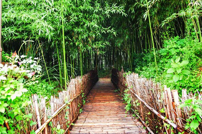 Scenes along Juknokwon's walking trails