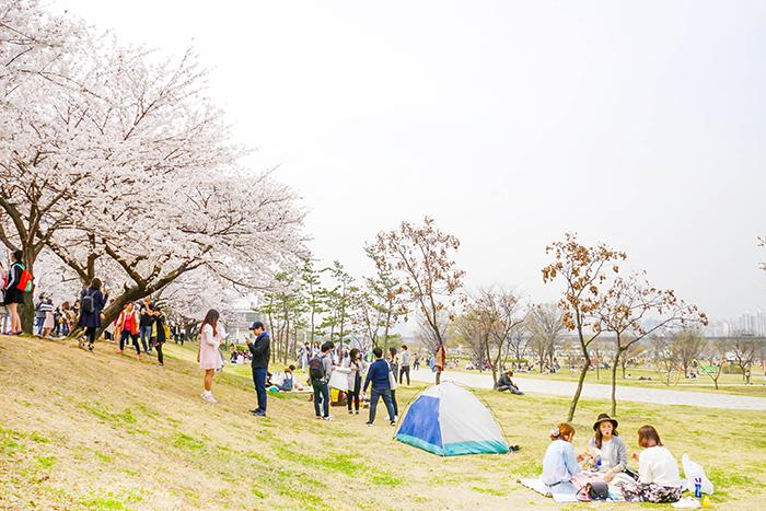 圖片) 汝矣島漢江公園的春光
