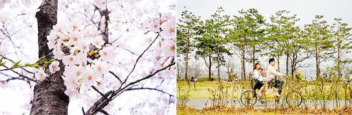 圖片) 適合賞櫻及騎單車的汝矣島漢江公園