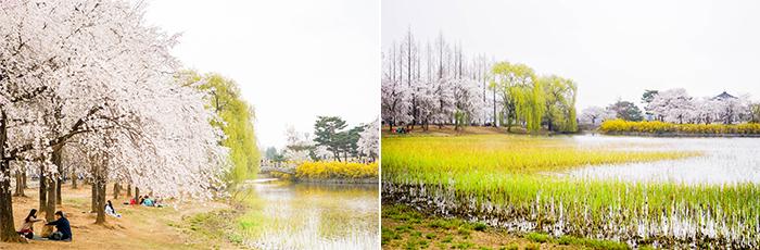 圖片) 一山湖水公園的春色