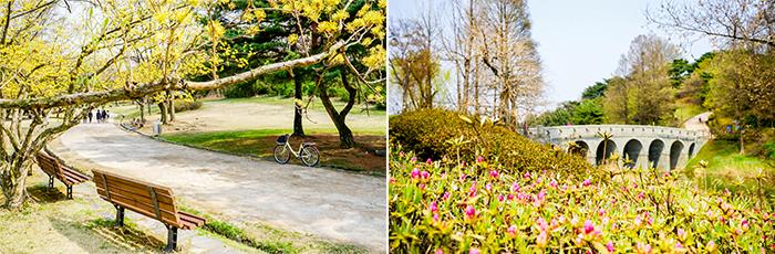 圖片) 開滿迎春花與杜鵑花的奧林匹克公園