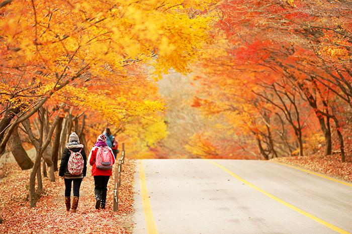 韩国秋季推荐旅游胜地——漫步深山赏枫叶