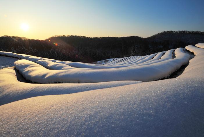 Winter sunrise at the tea plantation