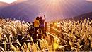 Лучшие места для осеннего путешествия по Корее Прогулка по серебристым полям мискантуса