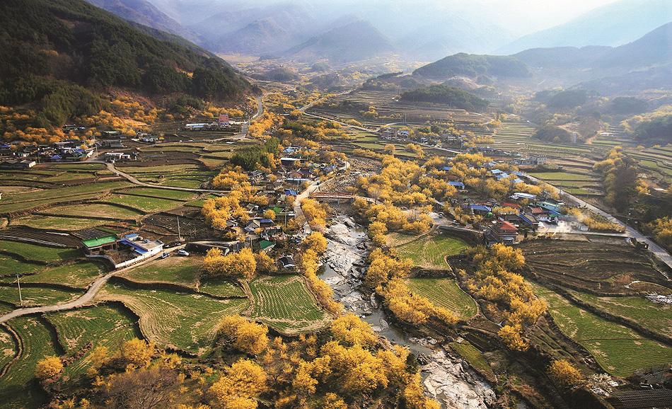 반곡마을 산수유군락지 (提供: 求礼郡厅)
