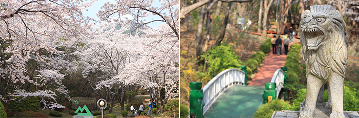 left)The cherry blossoms galore in the park inside, right)The lion statue stands at front of an arch bridge
