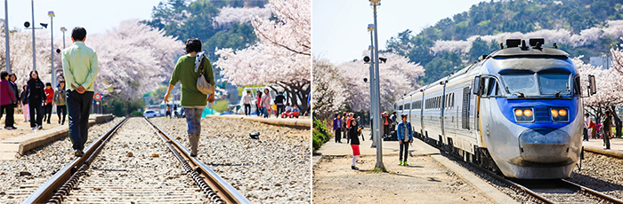 left)Full-blown cherry blossom tourists, looking around to the rail yard, right)The train was standing ready to ride the train station, train people entered