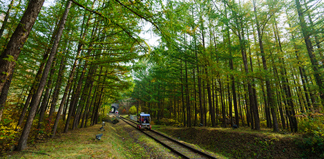 Pedal your Way through Nature on Railbikes!