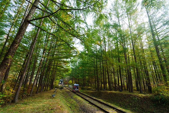旌善鐵路自行車沿途的林間秋色