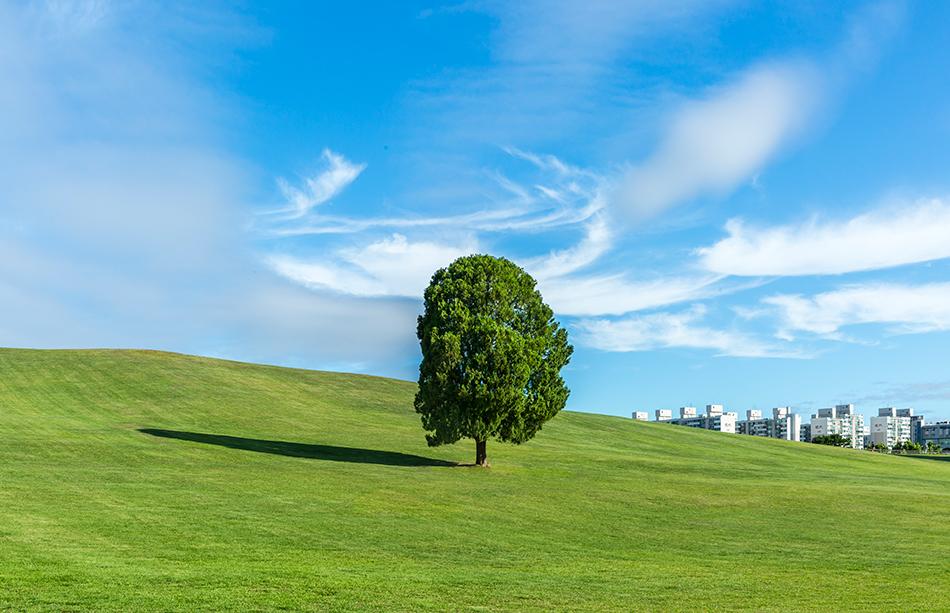 La colline du vent