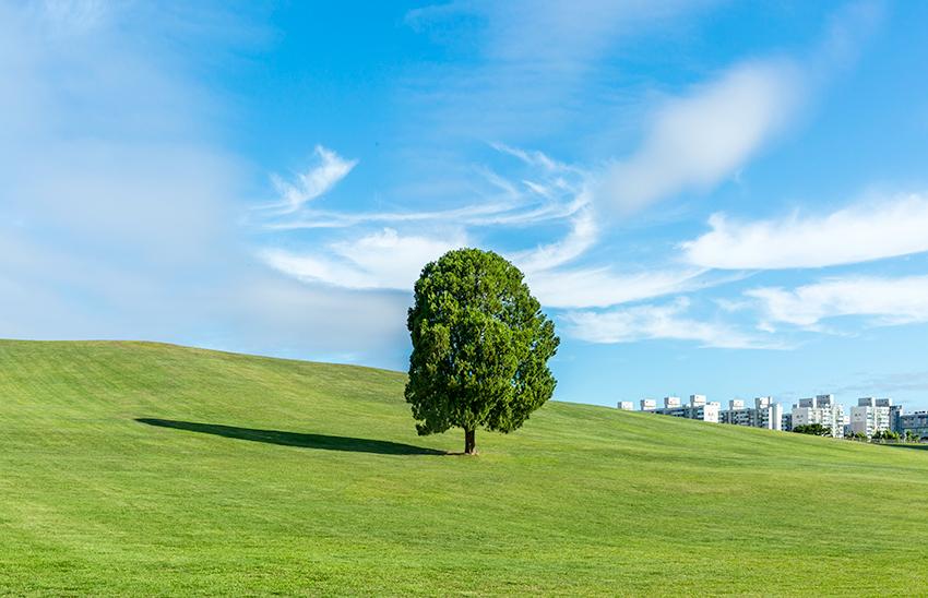 """El """"árbol solitario"""" del Parque Olímpico."""