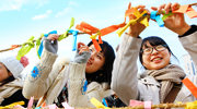 Der erste Vollmond des Jahres, Jeongwol Daeboreum