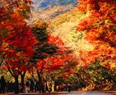 Herbstreise zum Nationalpark Naejangsan