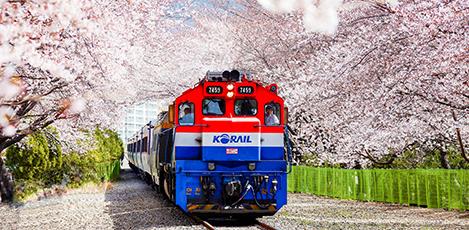 春風に誘われて旅立つ桜旅行、鎮海軍港祭