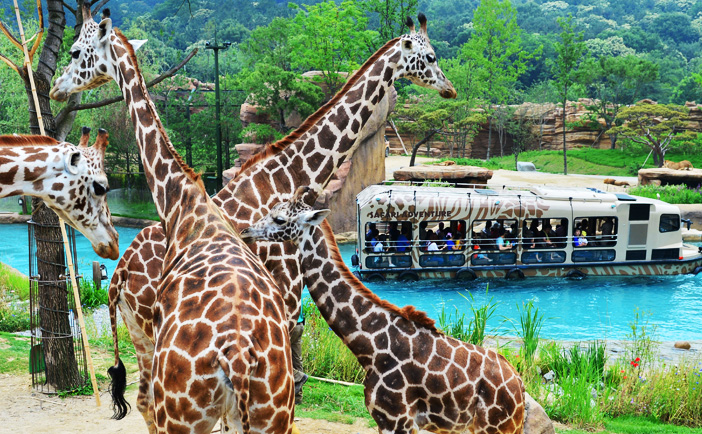 La zone 'Lost Valley' & Safari Tour (aut : Samsung Everland)