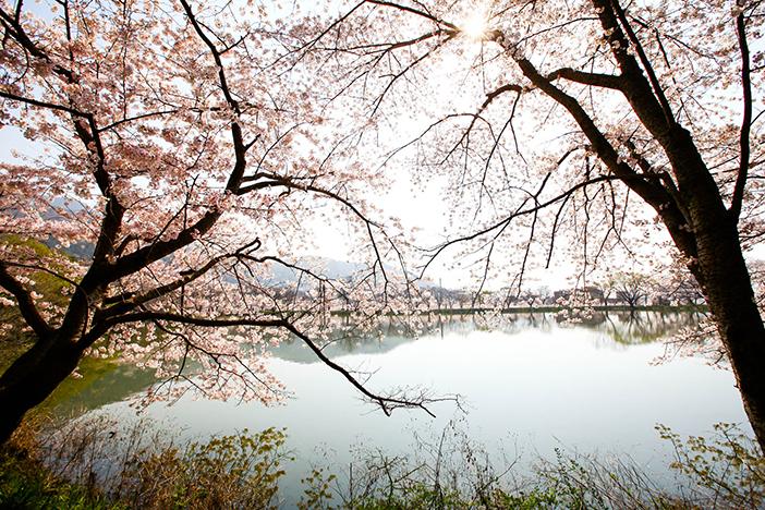 Экологический парк водных ресурсов Чинхэ