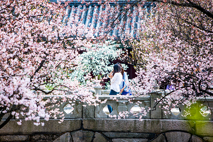 Spring at Changgyeonggung Palace
