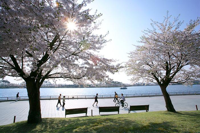 Ilsan Lake Park (Credit: Ilsan Lake Park)