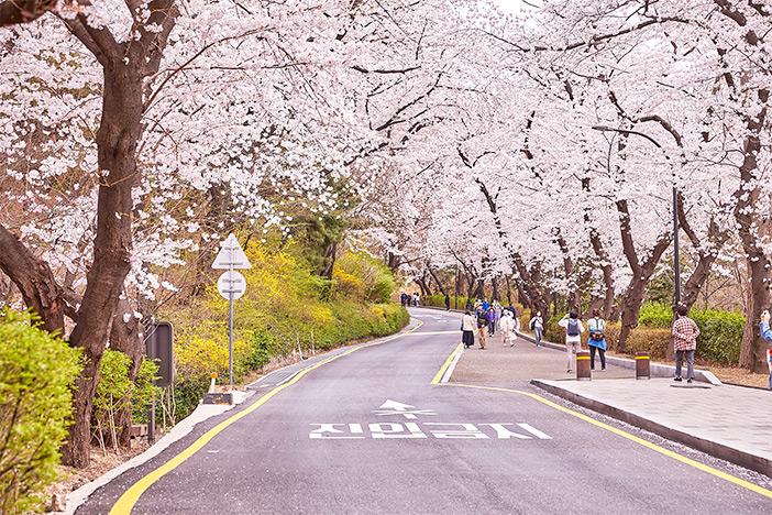 Walking path in Namsan Park