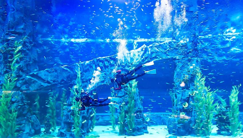 Lotte World Aquarium (Cortesía de Lotte World Aquarium)