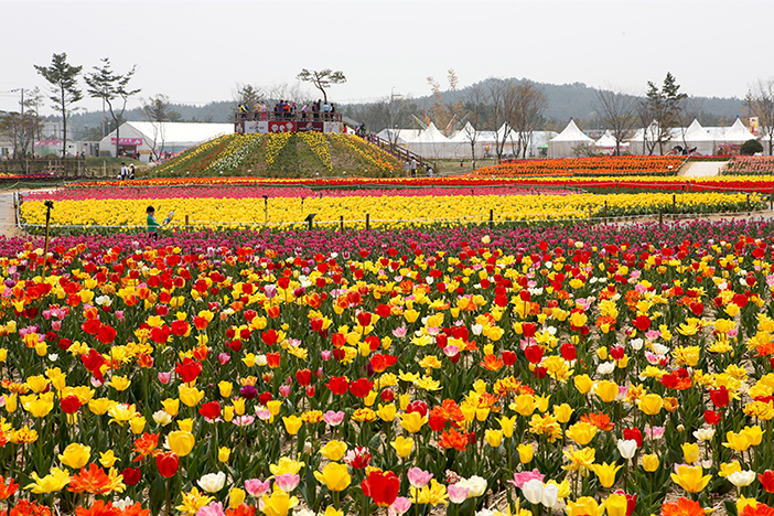 Taean Internationales Tulpenfestival