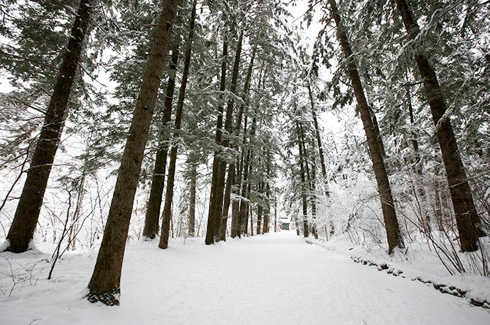 Woljeongsa Fir Tree Forest