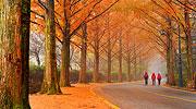 Herbst in Seoul