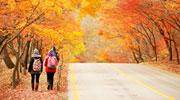 Bergwandern unter dem Herbstlaub