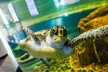 照片) 海龟船