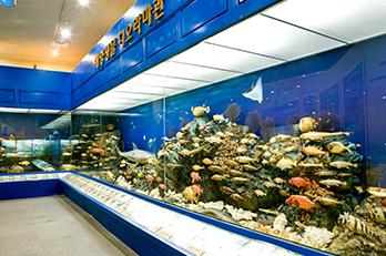 照片) 全罗南道海洋水产科学馆展示室