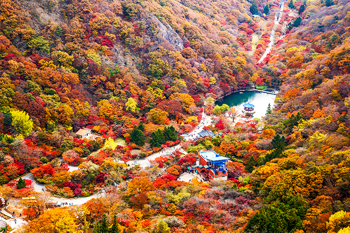 Foliage at Naejangsan National Park