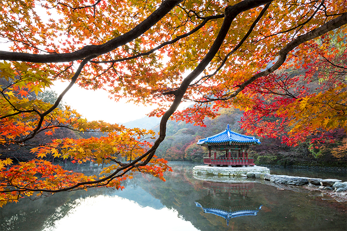 Foliage at Naejangsan Mountain