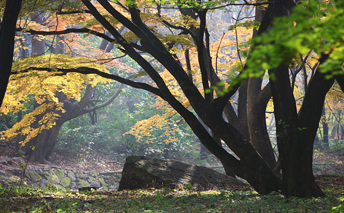 Осенняя листва в горах Нэчжансан