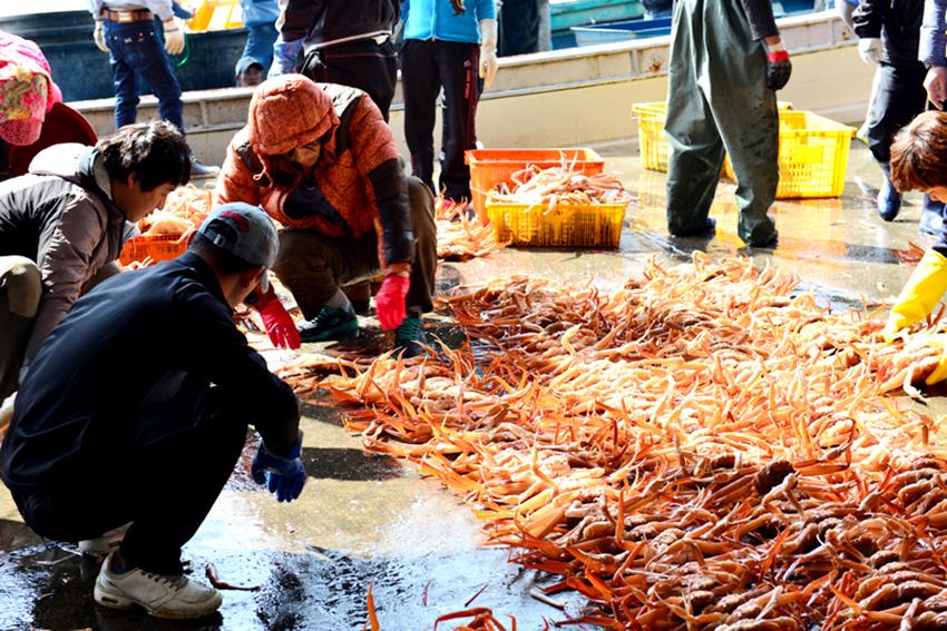 Фестиваль снежного краба в Ёндоке (Источник: Оргкомитет фестиваля снежного краба в Ёндоке)