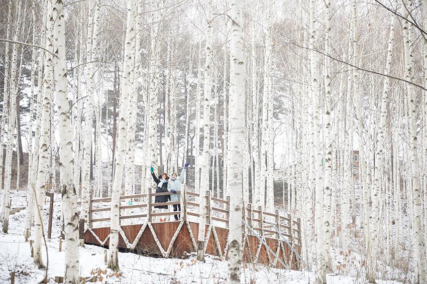 Берёзовый лес Вондэри