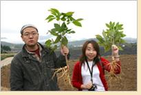 Festival du ginseng de Geumsan