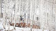 L'hiver à Gangwon-do