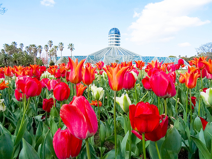 Ботанический сад Ёмичжи (Источник: Бот.сад Ёмичжи)