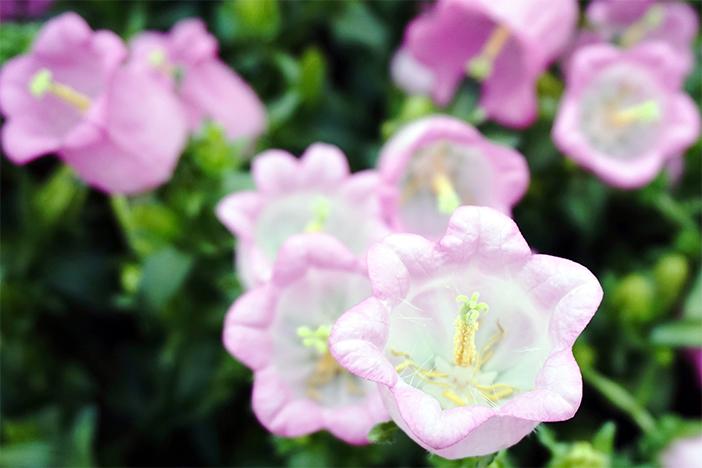 Ботанический сад с различными видами цветов со всего мира