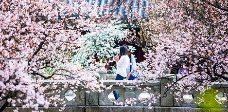 不同主题、一样美丽——韩国春季赏花胜地