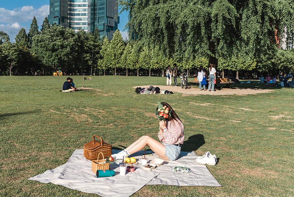 首爾林的草坪