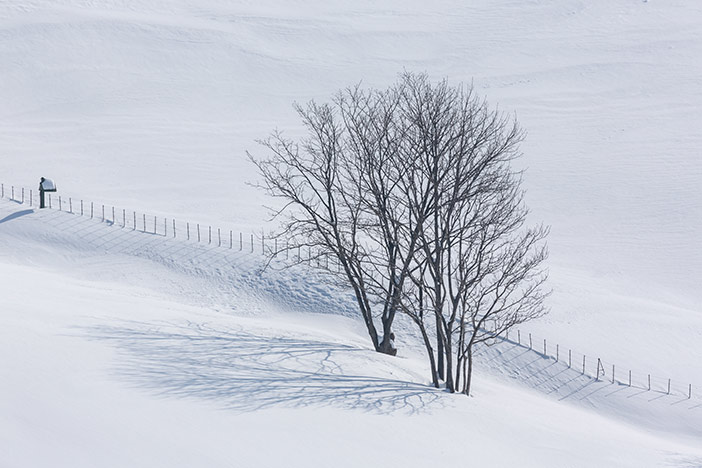 Schaffarm Daegwallyeong im Schnee