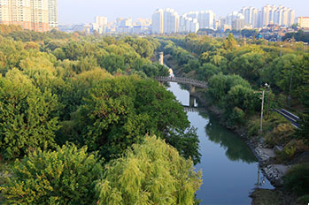 Willow forest of Yeouido Saetgang Ecological Park