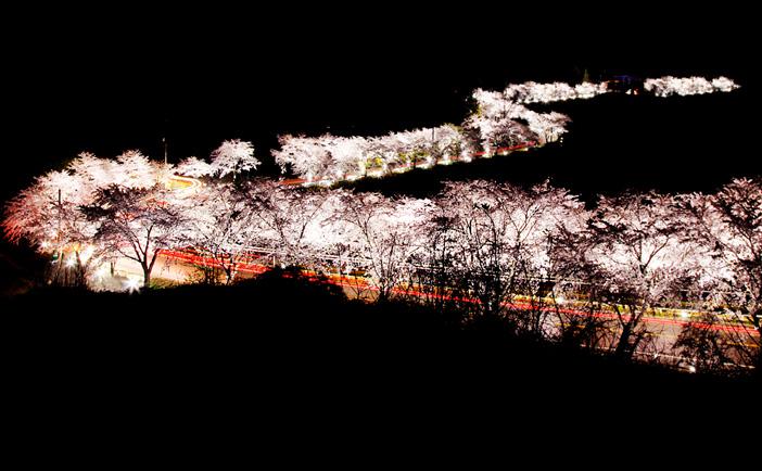堤川清風湖桜祭り(写真提供:堤川文化観光部)