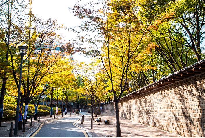 Snapshots along Deoksugung Palace Stone-wall Road